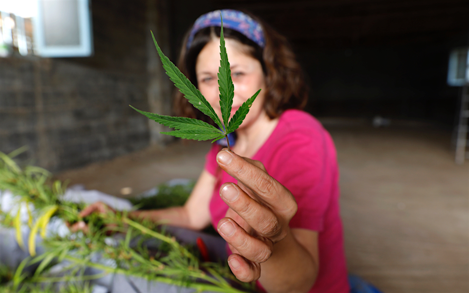 cannabis_moutafis1_web