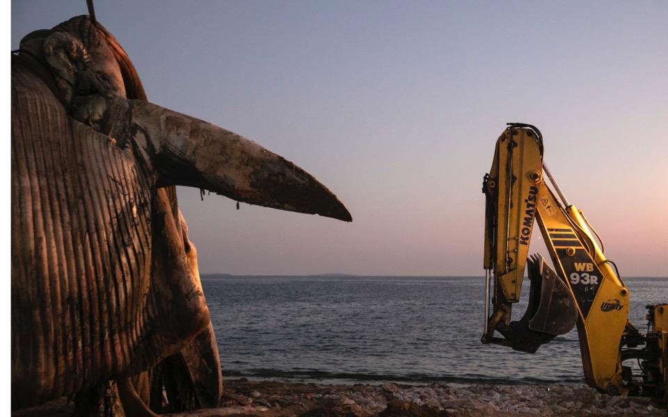 dead-whale-piraeus-1