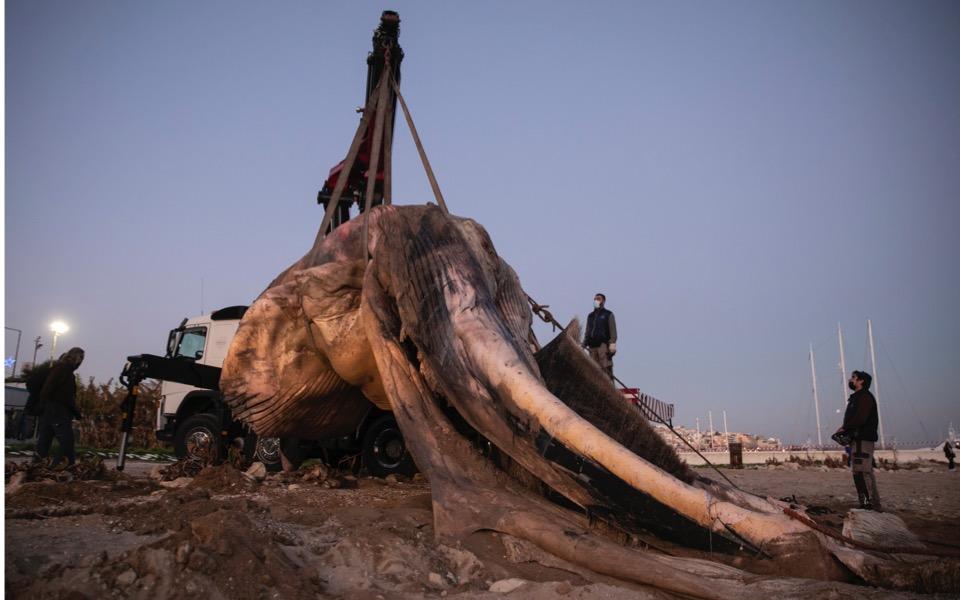 dead-whale-piraeus