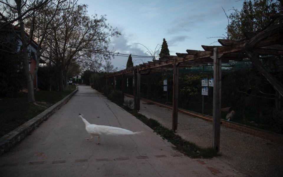attica-zoo-5