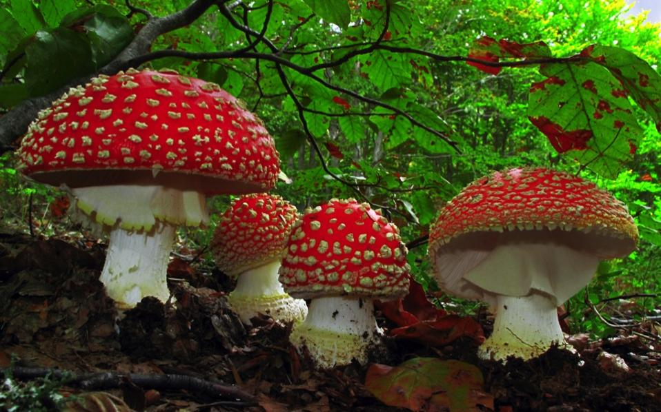Image result for Images of mushrooms