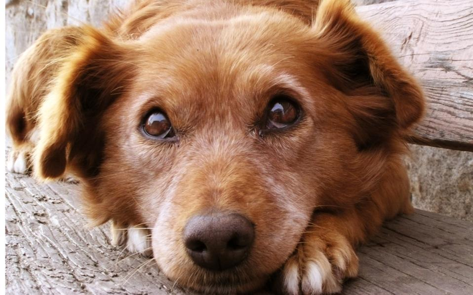dog-how-to-select-your-new-best-friend-thinkstock99062463-thumb-large
