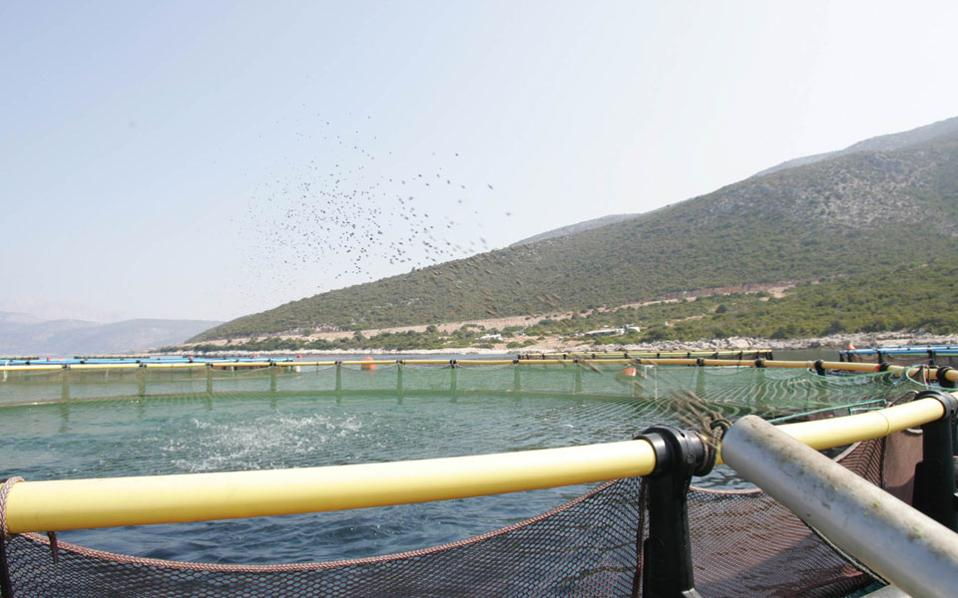 Ny based fund takes control of andromeda fish farming for Fish farming business