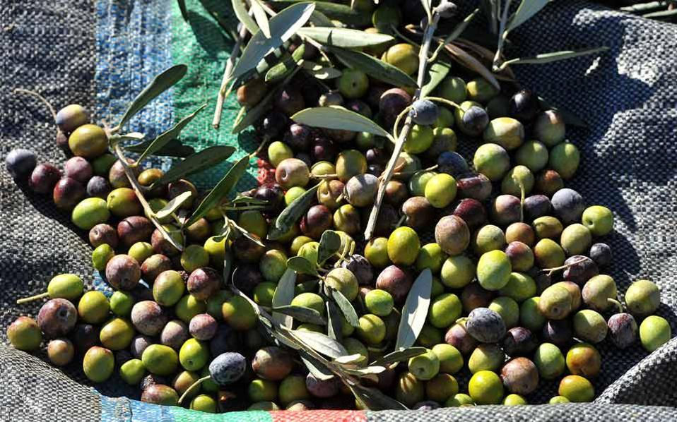 olive_exports_web