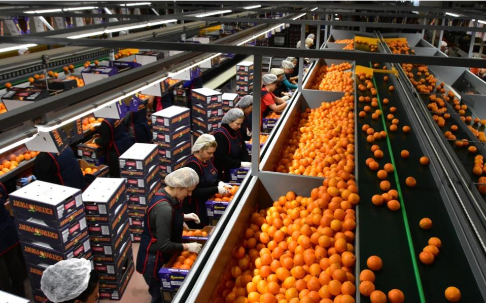 fruit_production
