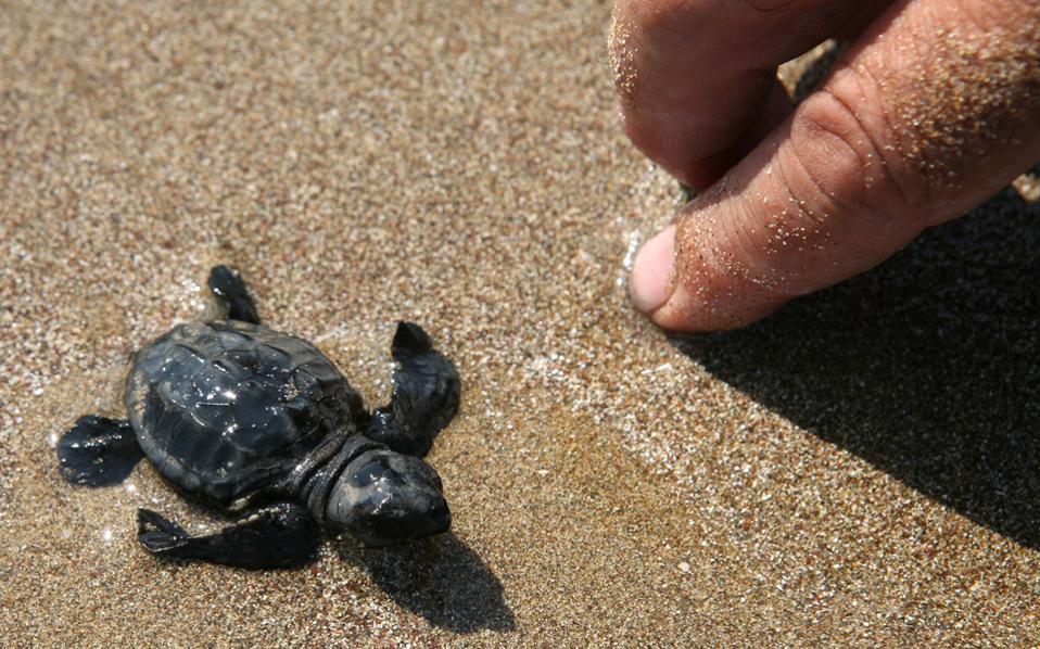 turtles_web