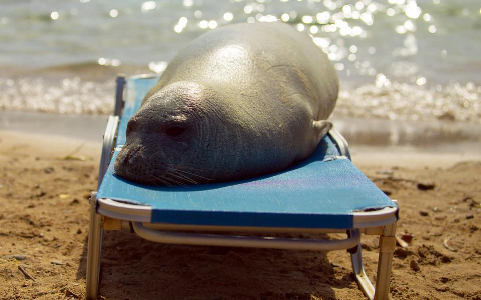 Argyro relaxing on a beach, on Samos island, in a recent photograph. Can a wild 150-kilogram animal really be treated like a pet?