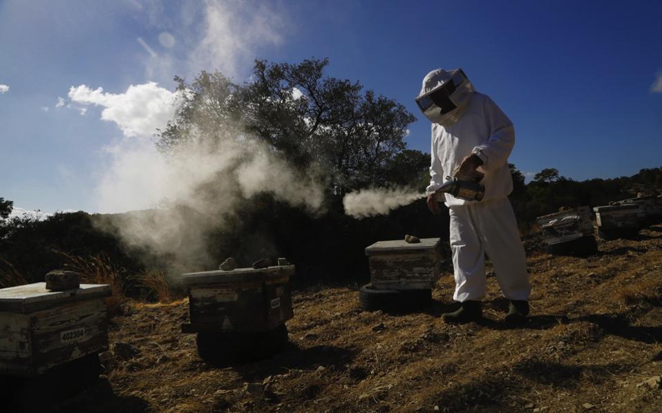 cyprus_beekeepers_web