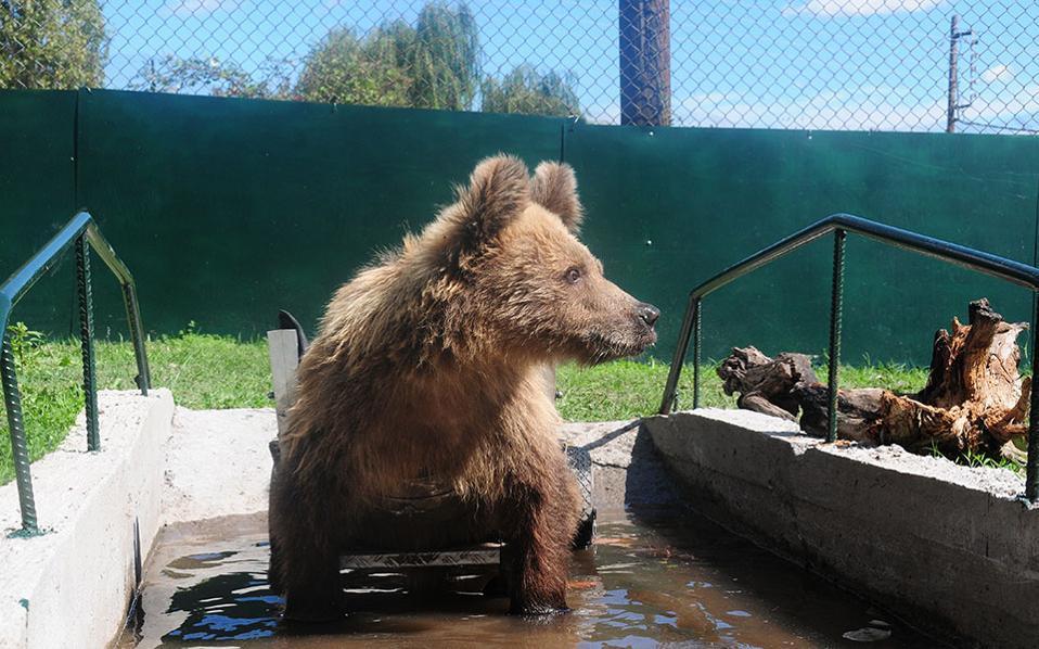 Meet Usko, the bear on wheels | Community | ekathimerini com