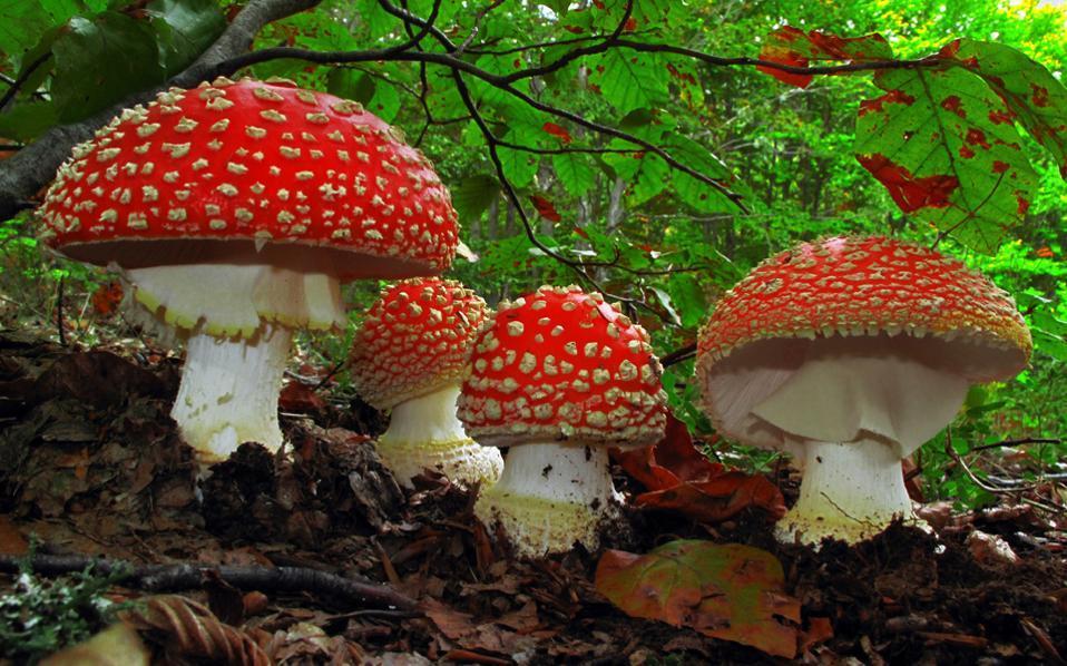 red_mushrooms