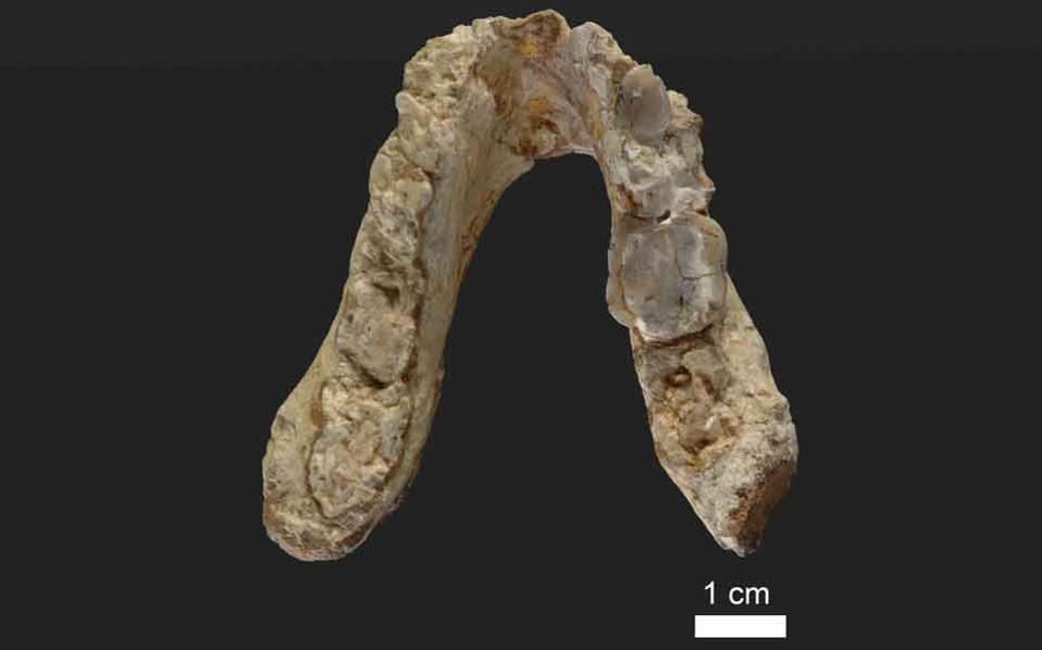 graecopithecus