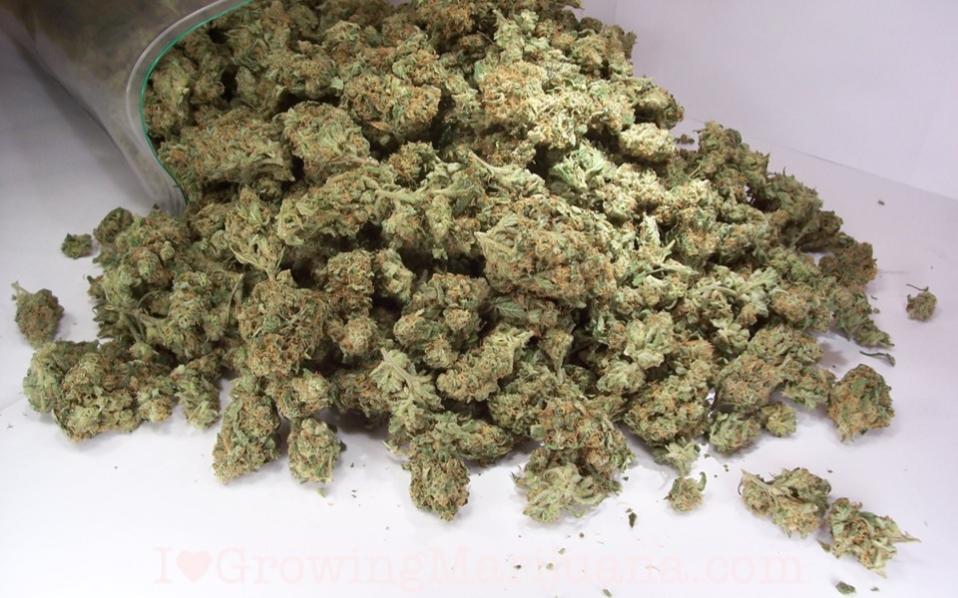 cannabisracket