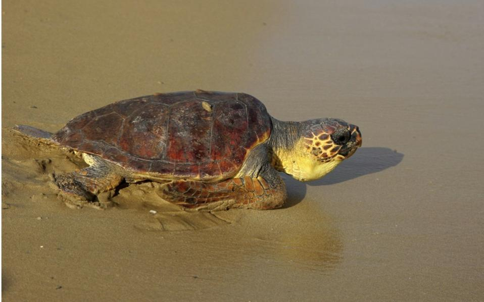 turtleseason
