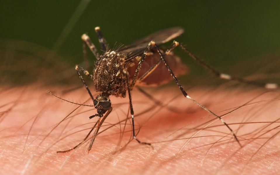 West Nile-associated death reported in Tarrant County