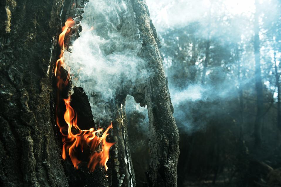 fireforweb