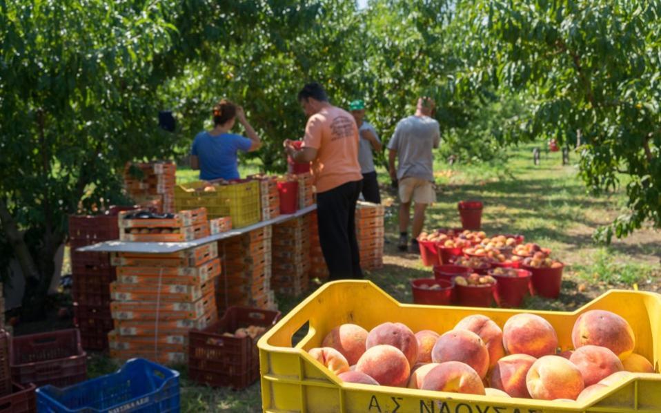peaches_fruit