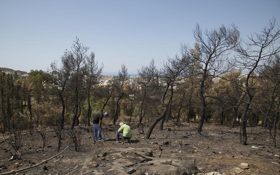 Investigators from DAEE look for clues in the burnt woodland. (Photo: Alexia Tsagkari)