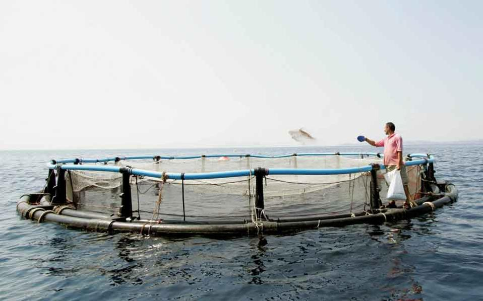 It is only recently that Greek fish farming companies started standardizing their products for retail, while they are expected to start production of ready-to-cook fish-based meals.