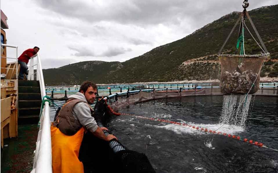 selonda_fish_farming_web
