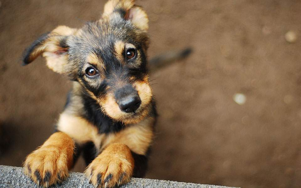 bill on treatment of strays withdrawn after animal rights groups