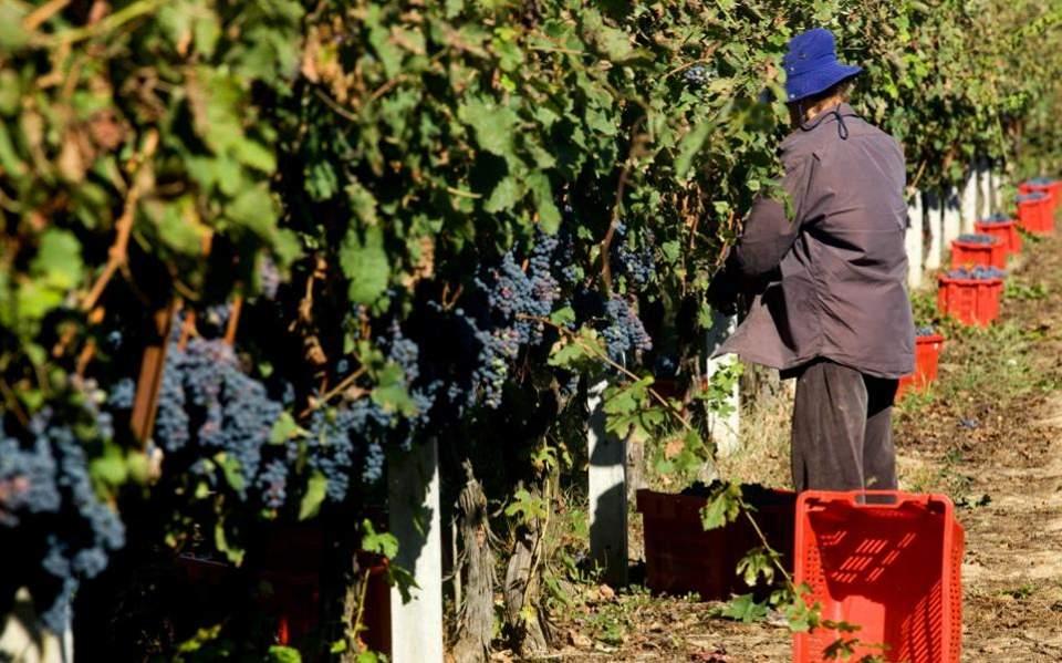wine_grapes_web
