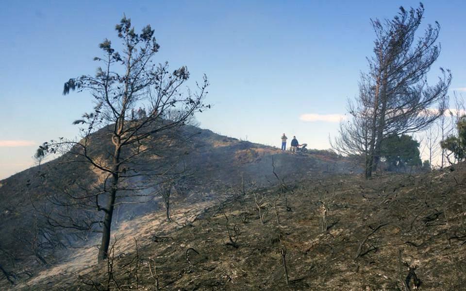 burned-forest