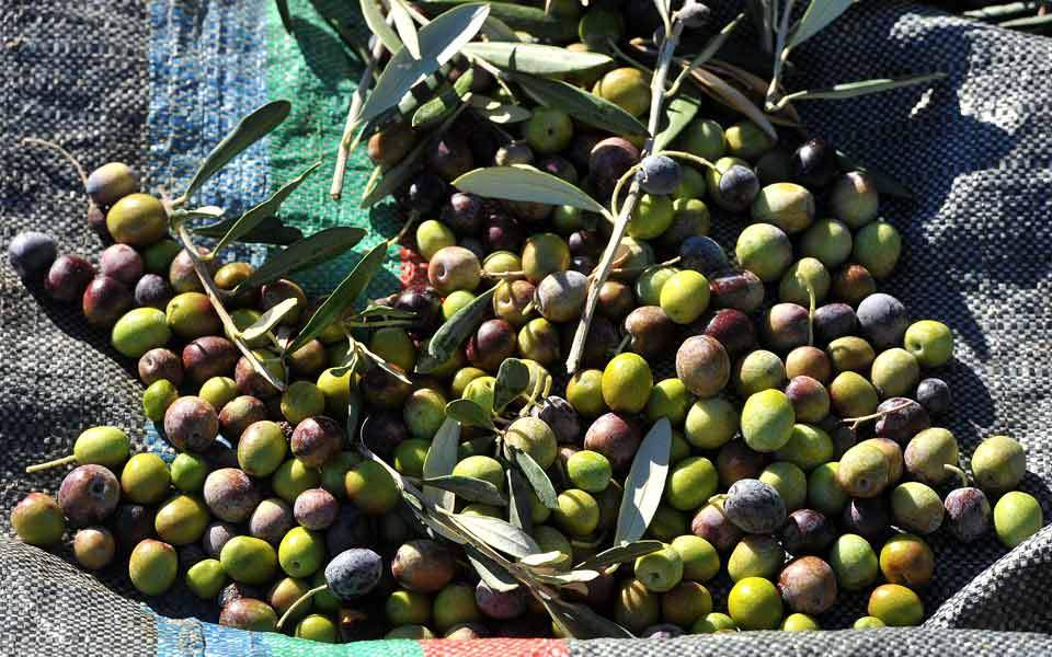 olive_exports_web