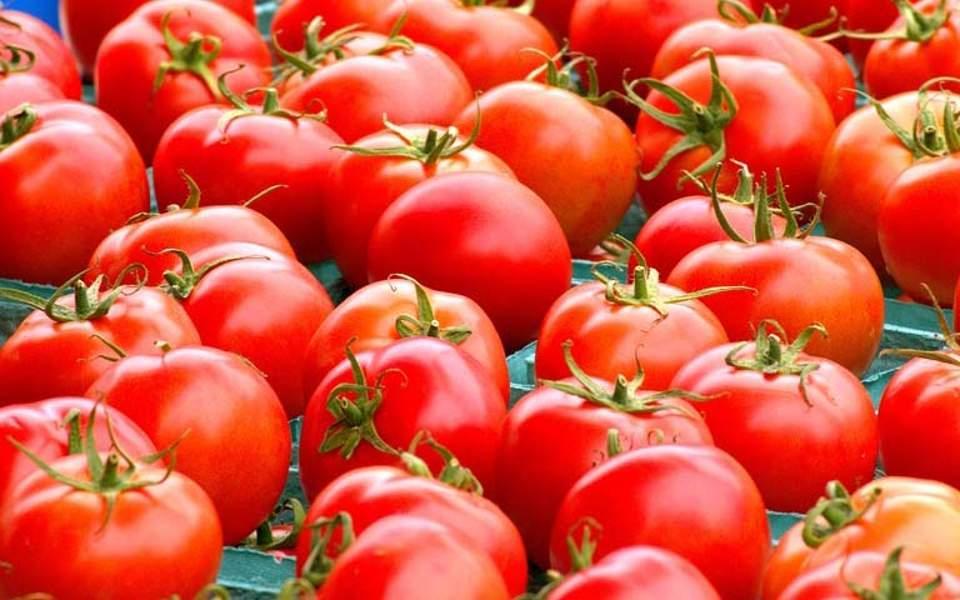 tomatoes_web