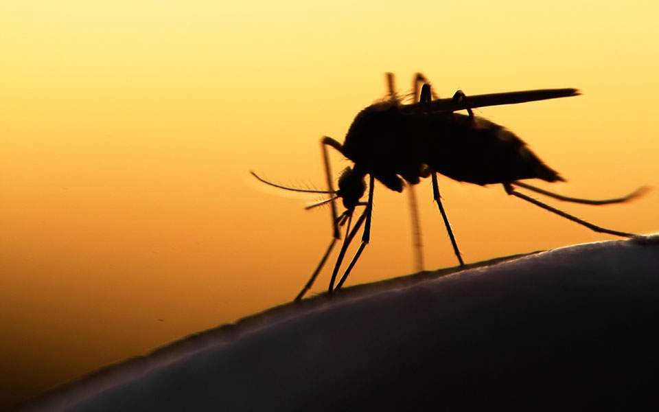 First human case of West Nile virus confirmed