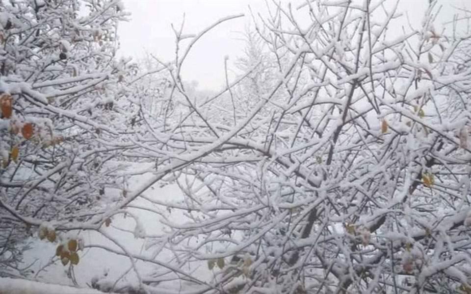 snow_web--4