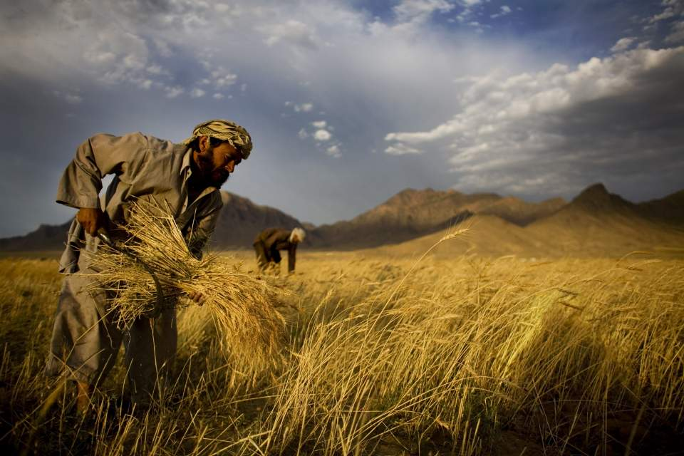 afghan_farmers