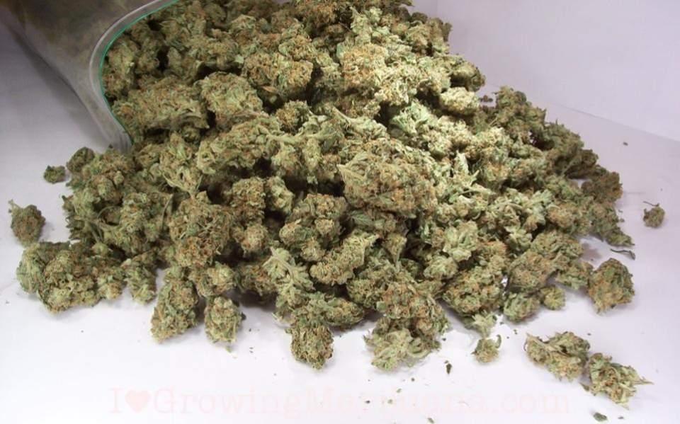 cannabisracket-thumb-large