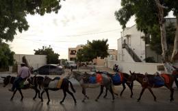 donkeys-santorini