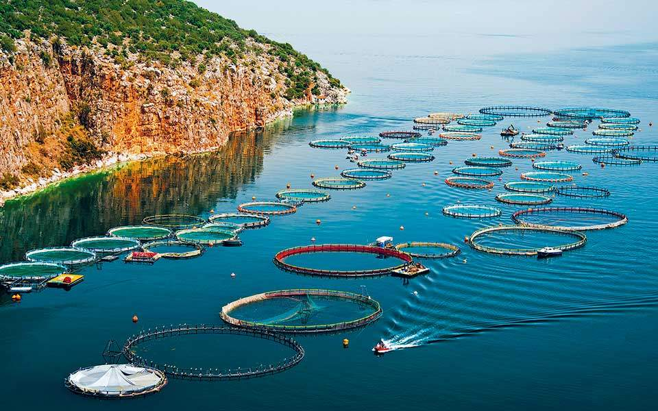 fish_farming_rings_web