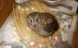 owl-sanctuary_web