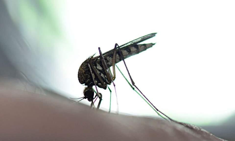 West Nile virus case in Bulgaria linked to Cyprus