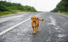 dog_stray