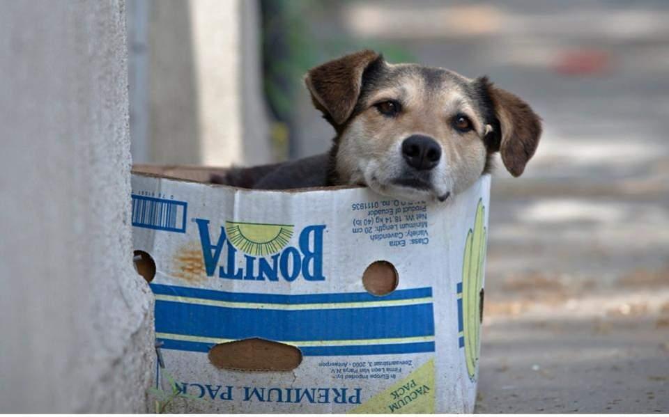 Dozens of dogs poisoned in 10 days