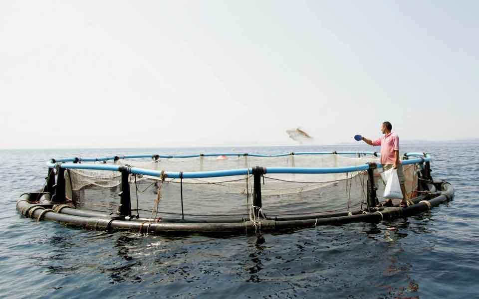 fish_farmer_web