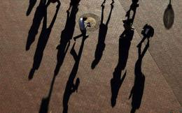 shadow_web
