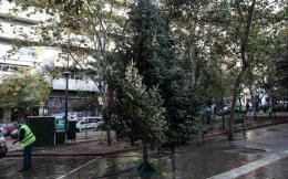 tree--2