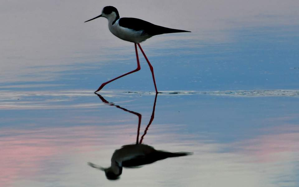 bird_web