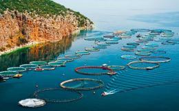 fish_farming_rings_web