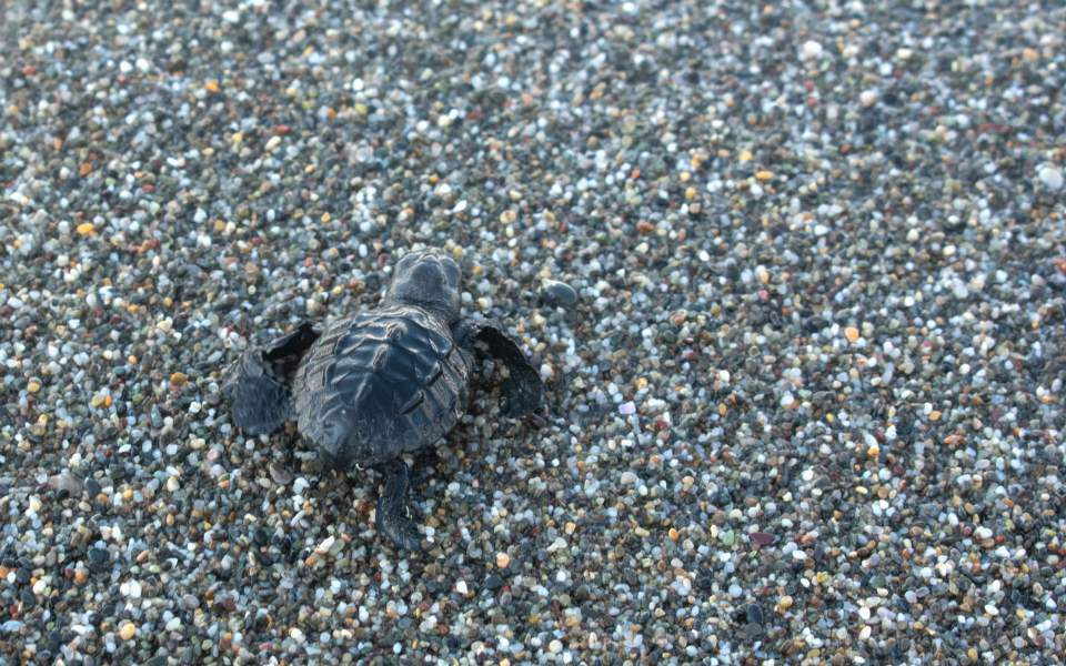 sea_turtle_web