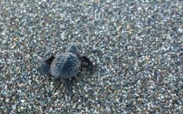 sea_turtle_web