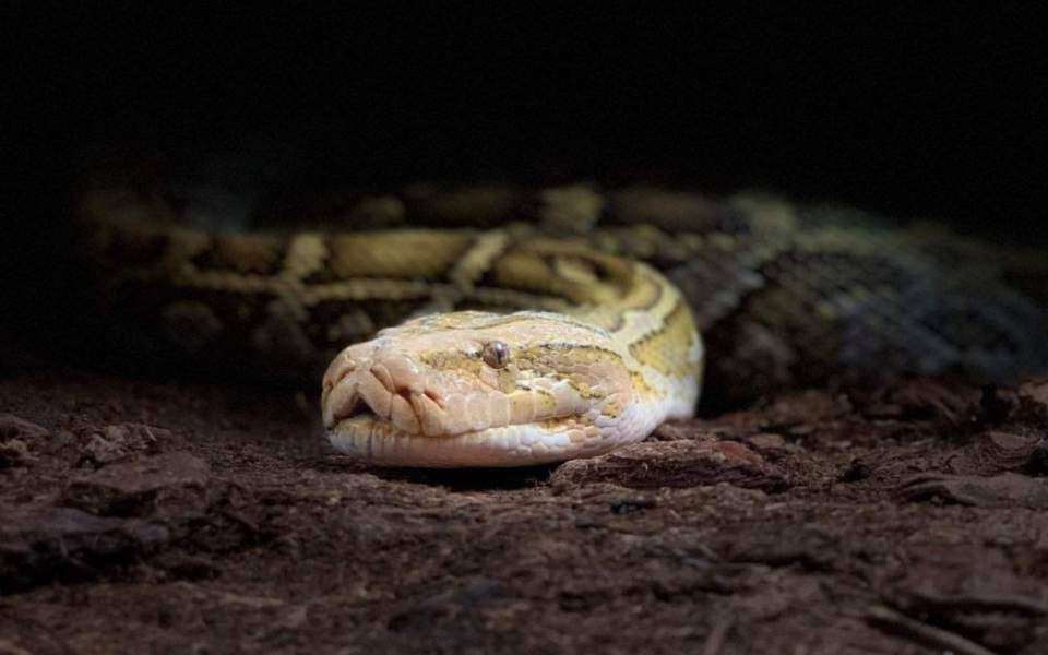 snake--helene-hoffmann
