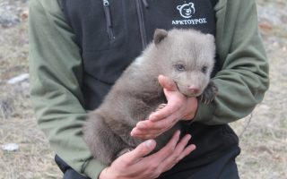 bear-conservation-group-launches-appeal-for-injured-cub