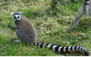 attica-zoological-park-spata-year-round