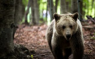 arcturos-offers-sanctuary-to-bears-that-can-t-go-home