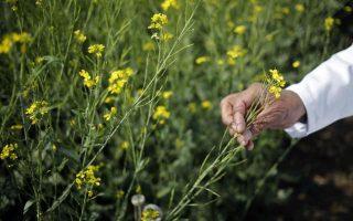 greece-among-majority-of-eu-members-seeking-opt-out-from-growing-gm-crops